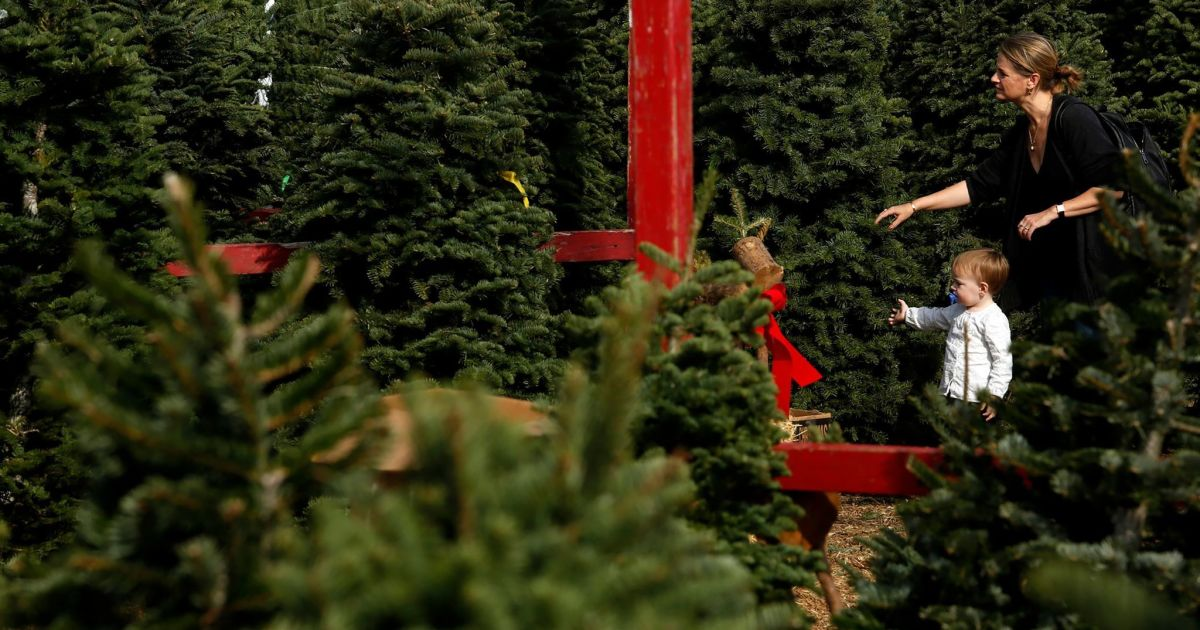 Where to buy L.A. Christmas trees for the 2020 holidays