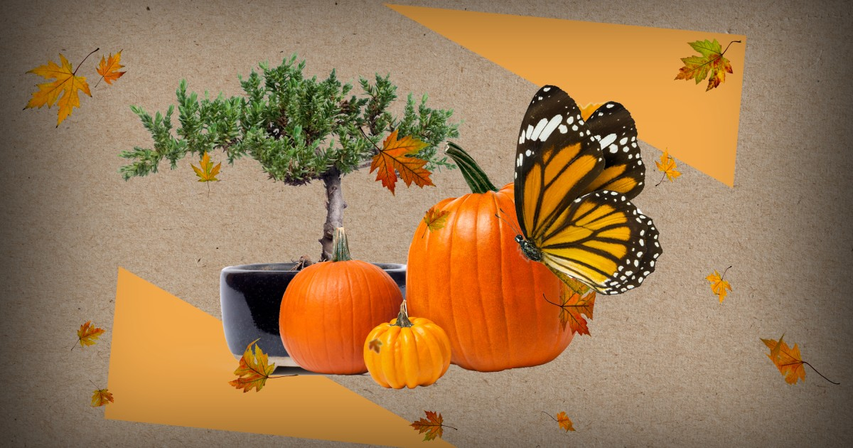 Fall things to do in L.A. for plant lovers: Hayrides, pumpkins